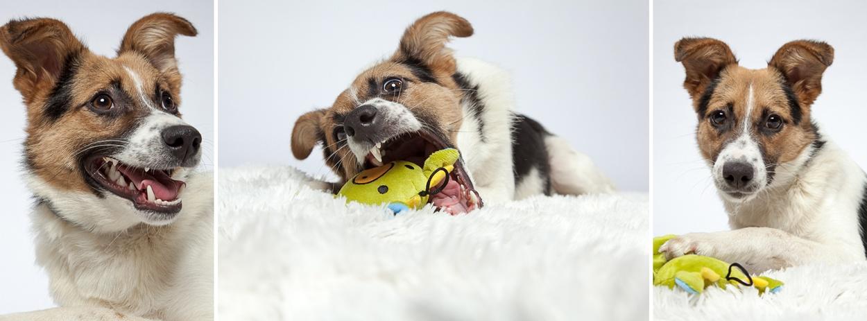 Aufnahmen von Ihrem Hund in entspannter Atmosphäre!