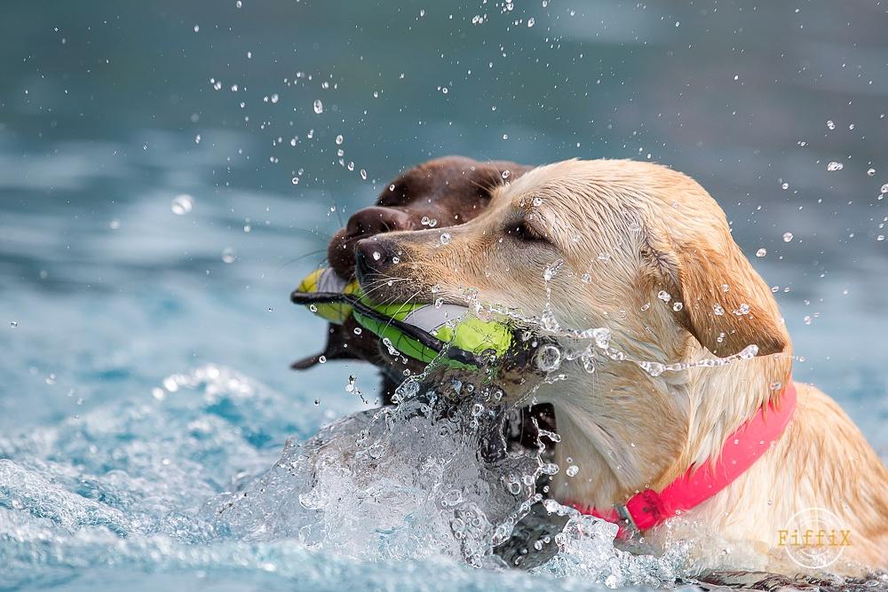 Hundeschwimmen im Freibad Ensdorf