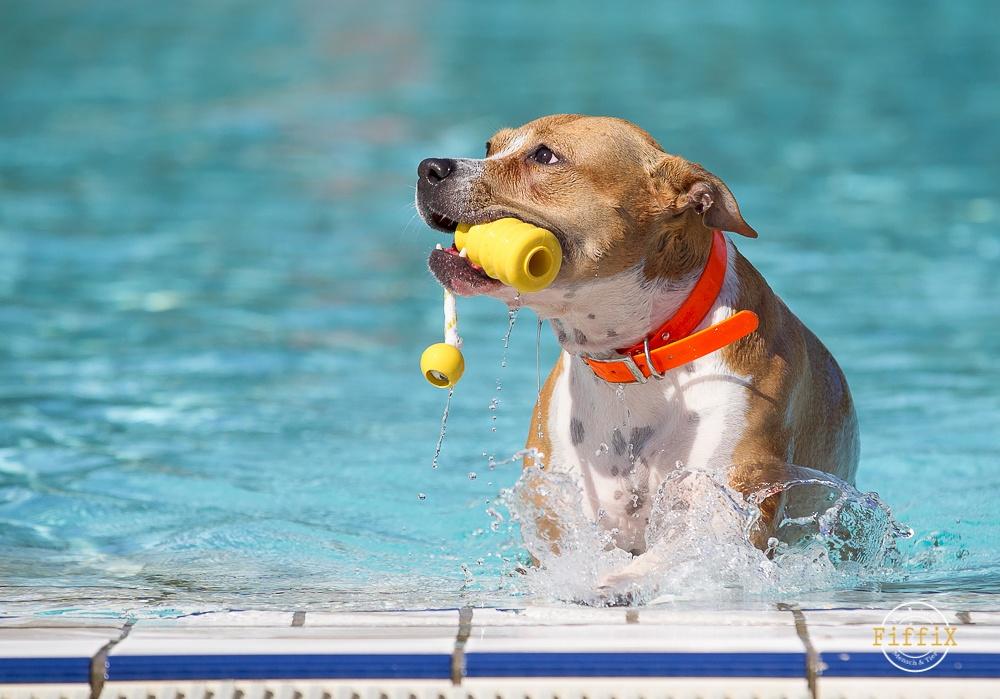 Hund im Freibad