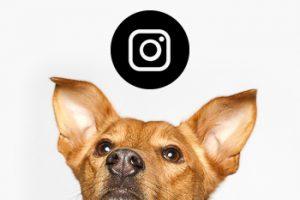 Fiffix Instagram-Seite