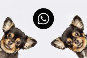Termine buchen Whatsapp