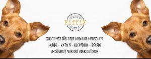 fiffix Fotostudio für Zwei- und Vierbeiner