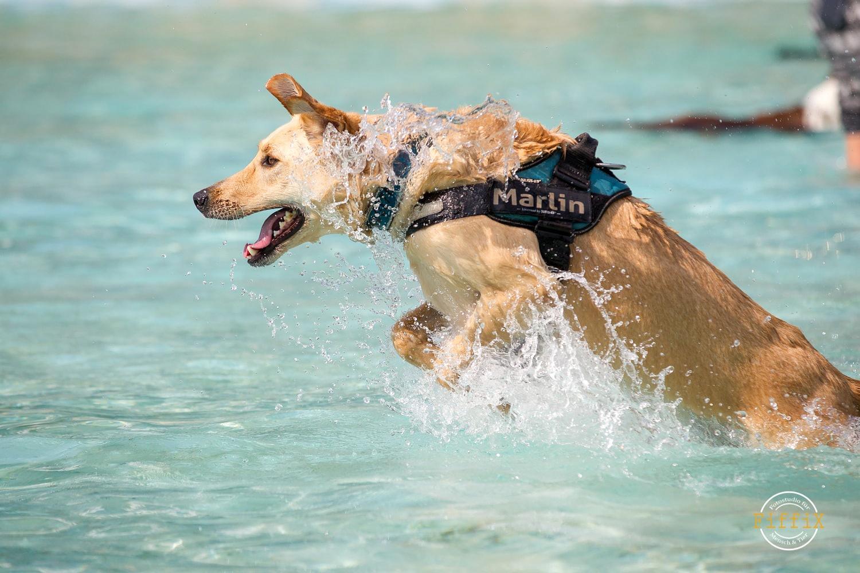 Freibad Ensdorf Hundeschwimmen